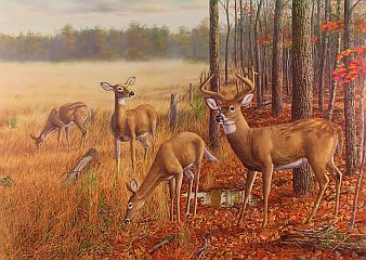 """A Brand New Day"" by wildlife artist Randy McGovern"
